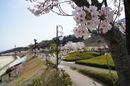 広島市 佐伯運動公園は街を見下ろす広大な敷地、お花見にも