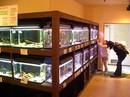 広島市水産振興センター、無料で学べる 魚の資料館へ行こう!