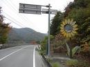 世羅の隠れシンボル?3mのジャンボヒマワリが咲いている風景