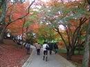 尾関山公園 紅葉のトンネルにウットリ!駐車場 完備で便利