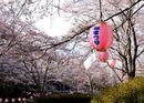 土師ダム(八千代湖)を囲む桜、のどごえ公園の美しい風景