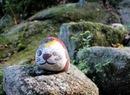 猫の細道、尾道の坂をちょっと楽しくさせる福石猫アート
