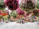 松江フォーゲルパーク、宍道湖見下ろす公園で花と鳥に戯れ