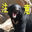 熊に注意!ツキノワグマに気を付けたい、6つのポイント