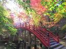 今高野山・龍華寺の秋、世羅の紅葉スポット
