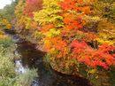 美しい秋色に!廿日市市吉和の紅葉が見頃へ