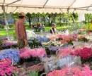 春のグリーンフェア、広島に花と緑が溢れるイベント