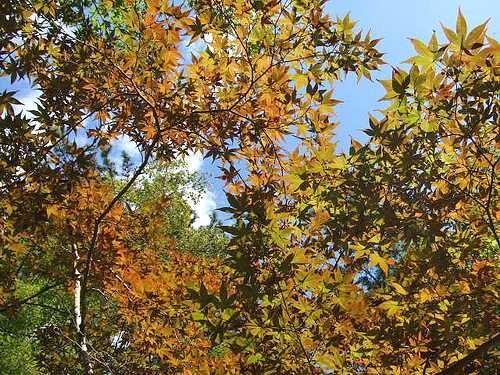 もみじ谷公園もちょっぴり紅葉