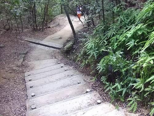 弥山 山道