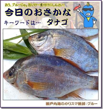 タナゴの煮つけレシピ 【瀬戸内海の美味しい魚】