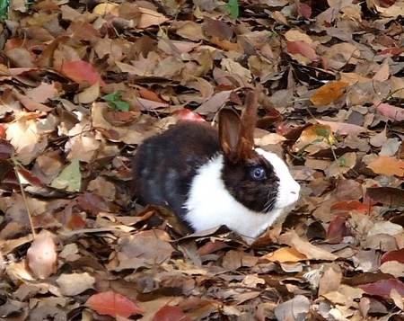 蜂ヶ峯公園 ウサギ小屋