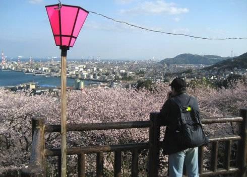 亀居公園の桜、亀井城跡の展望エリアから