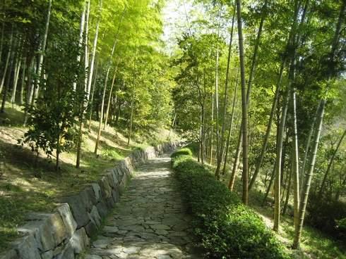 三景園の竹林