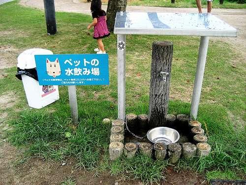 宮島SA下りには犬の水飲み場も