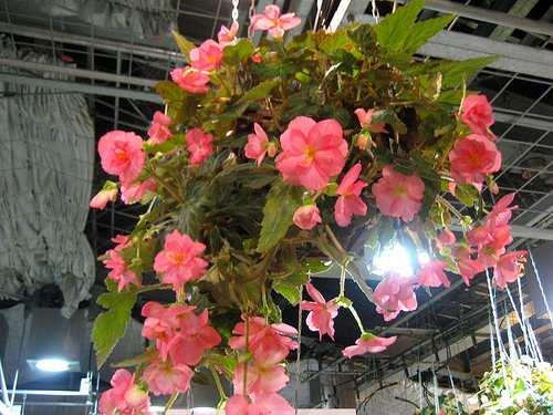 花と光のページェント 植物公園13