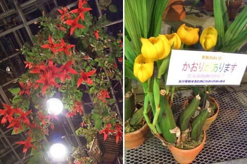 花と光のページェント 植物公園14