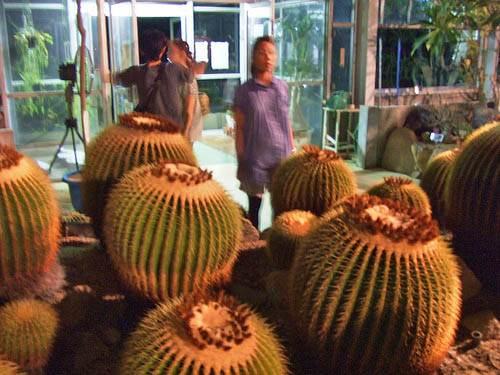 花と光のページェント 植物公園15