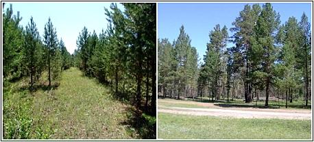 グリーンサイトライセンス (GSL)を導入し、植林活動をスタート