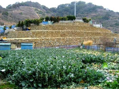 鹿島 段々畑が 美しい日本のむら景観コンテストで受賞