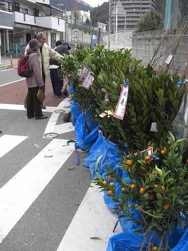三原神明市 2011 画像 11