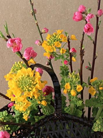 桃と菜の花 画像