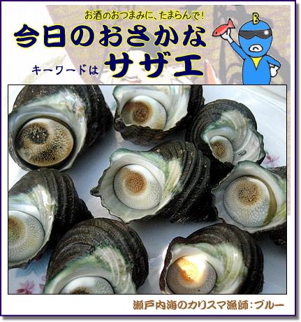 サザエ(栄螺) 調理法・レシピ!栄養も満点な高級魚介【今日のおさかな】