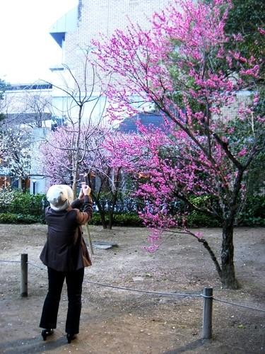 梅の花を激写