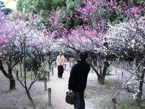 広島 梅の花の見頃は、3月中旬まで