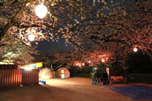 江波山公園の桜が満開!夜桜も楽しめる