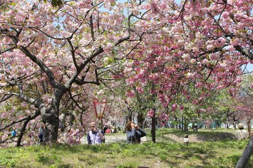 広島 造幣局 花のまわりみち 画像12