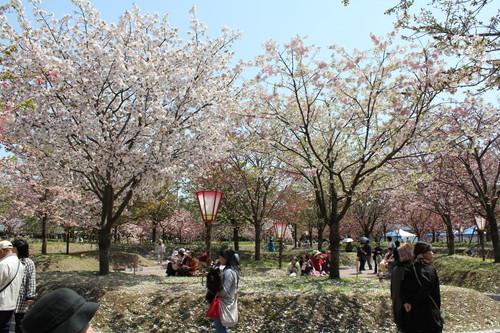 広島 造幣局 花のまわりみち 画像22