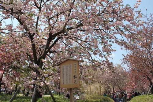 広島 造幣局 花のまわりみち 画像24