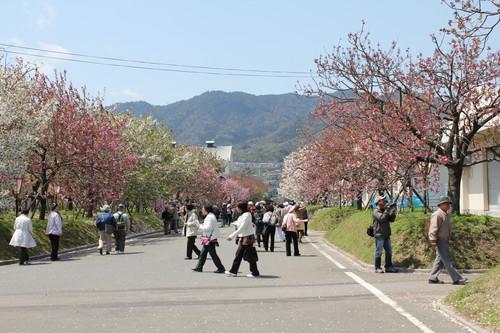 広島 造幣局 花のまわりみち 画像6