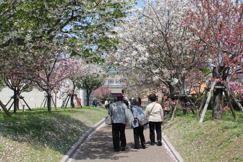 広島 造幣局 花のまわりみち 画像8