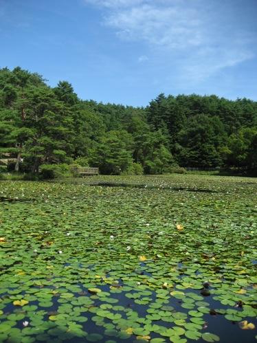 広島 極楽寺 画像8