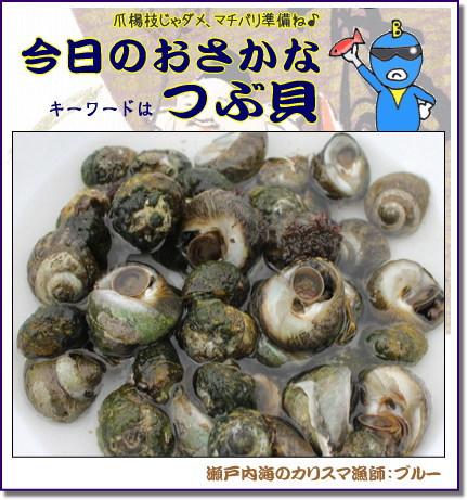 しったか貝(広島では つぶ貝)
