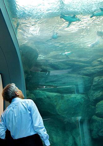 宮島水族館(みやじマリン) リニューアル後の画像8