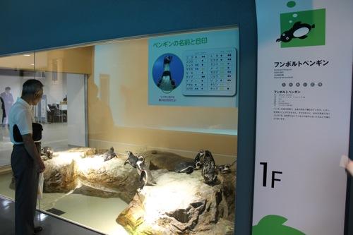 宮島水族館(みやじマリン)の ペンギン 画像2