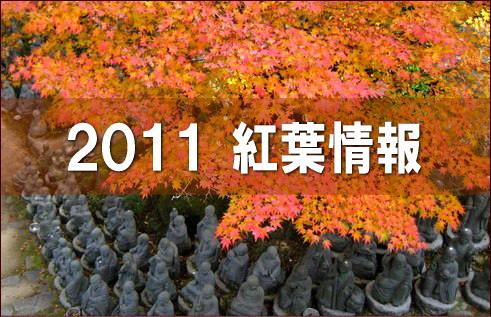 2011年 紅葉予想、色づき鮮やかで見ごろは