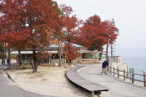 うさぎ島 大久野島の紅葉