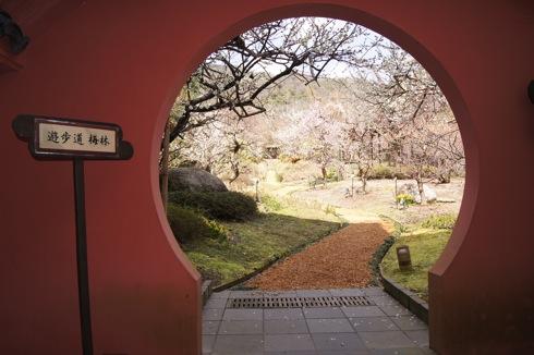 こんなところに梅林公園!晴れの日に散歩したい