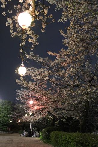 江波山公園の桜 画像4