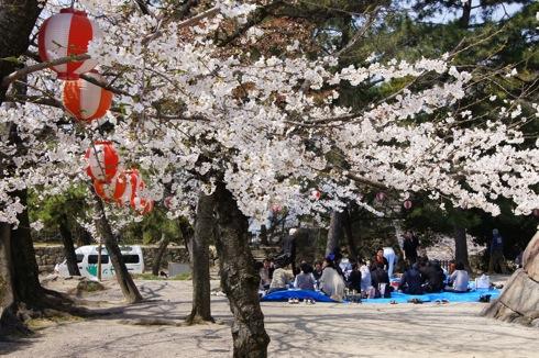 福山城の桜(お花見スポット) 画像2