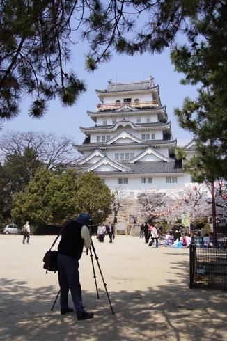 福山城の桜(お花見スポット) 画像3