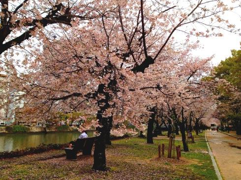 広島平和公園 桜の画像11