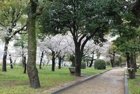 広島平和公園 桜の画像9