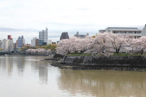 広島市内の川沿いの桜 散歩道 画像