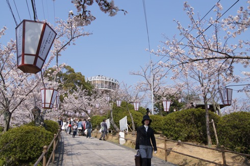 尾道 千光寺公園は 桜名所100選! 画像5