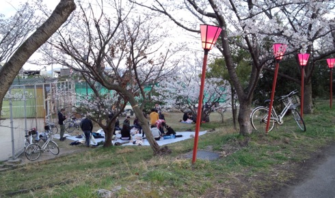 住吉堤防 桜並木 画像1