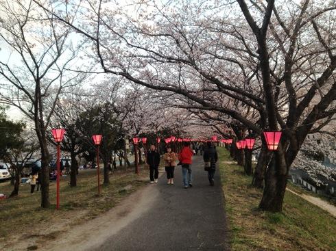住吉堤防 桜並木 画像4